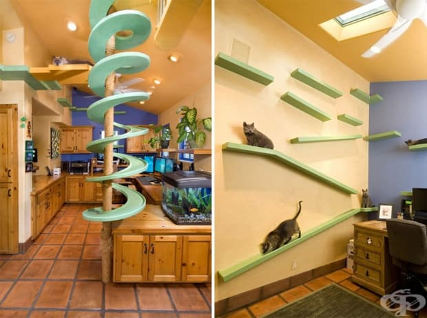 Уютен дом с много забавления за котки