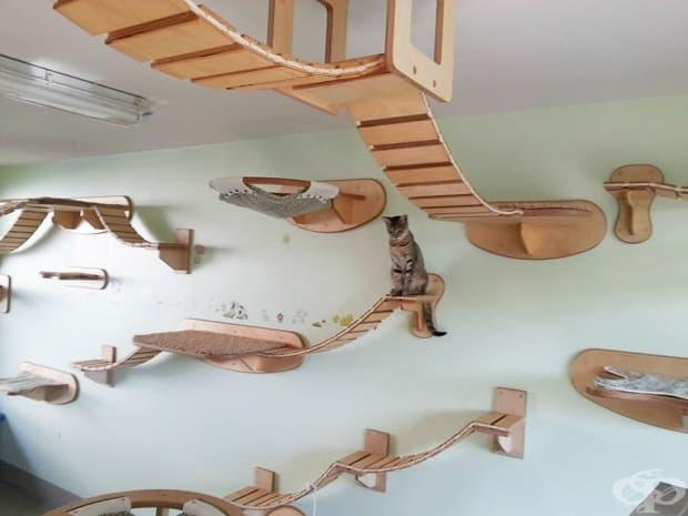 Детска площадка за котки