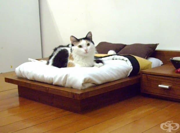 25 невероятни глезотии за любимата ви котка