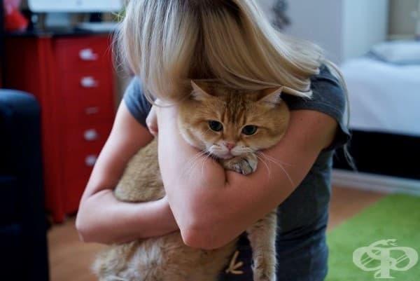 Запознайте се с Хосико – копие на котето от анимацията Шрек