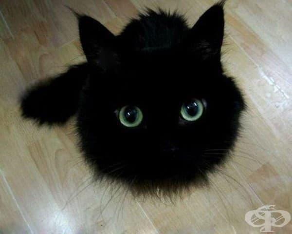 10 черни котки, които всъщност са дракончето Тутлес под прикритие
