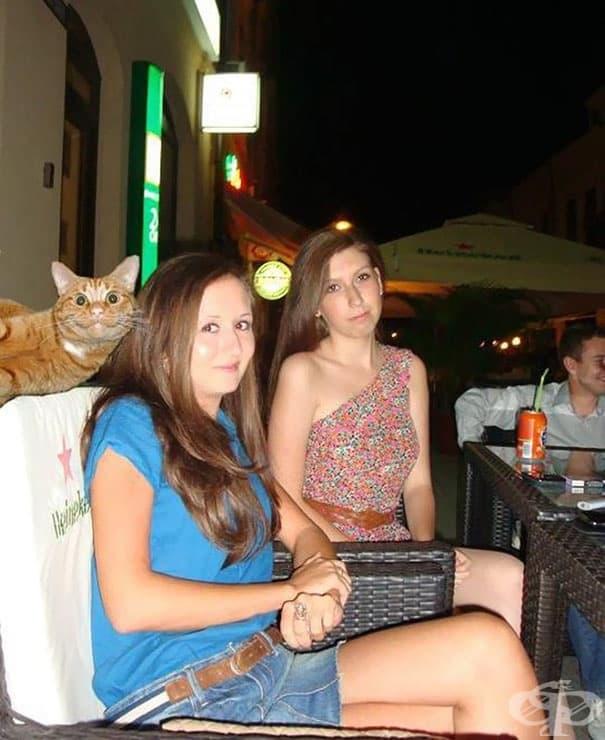 10 пъти, в които котки гадняри развалят перфектната снимка