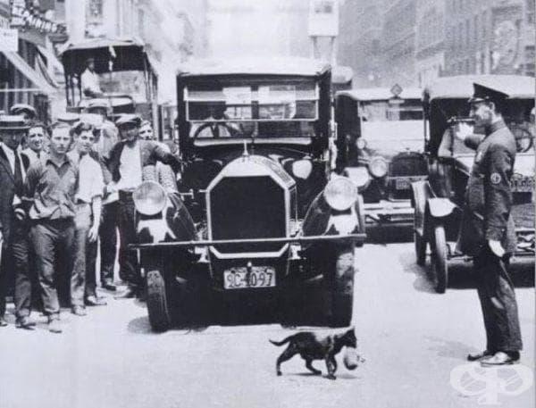 Котка пренася малкото си, 1925-та година