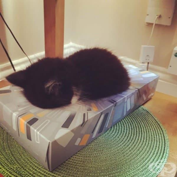 Омар заспал в кутията за салфетки