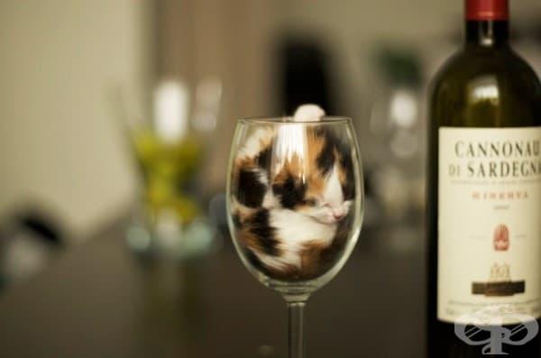 Благодаря, стига ми толкова вино за днес