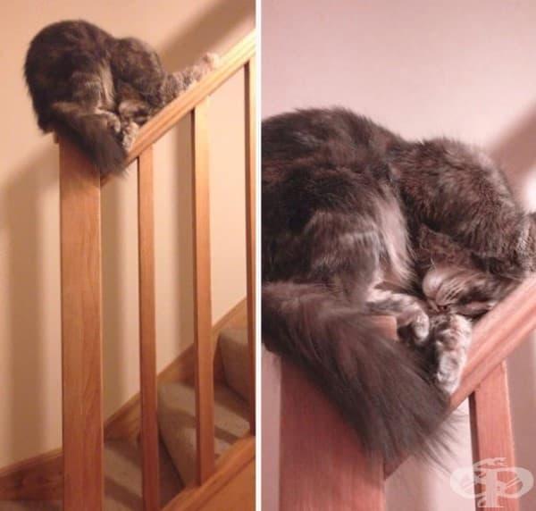 От всички възможни места тази котка е избрала най-неудобното