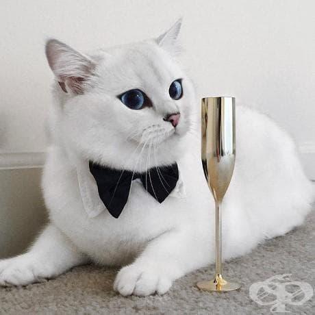 Виждали ли сте по-красиви котешки очи от тези?