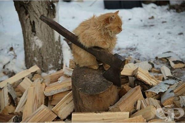 ….И любовта топли, но дървата са си дърва!
