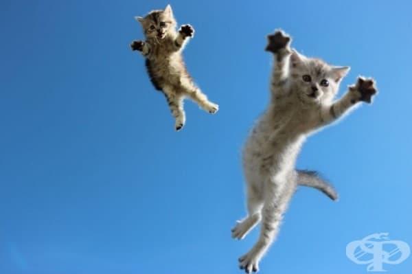 Летящите котконинджи нападат!