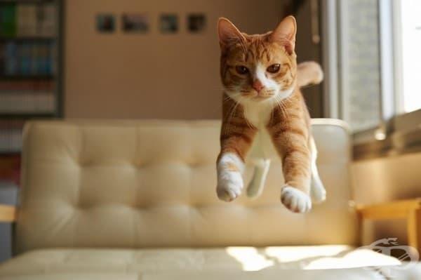 Най-голямото откритие на интернет: котките могат да летят.