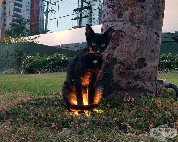 Пазителят на портала към ада