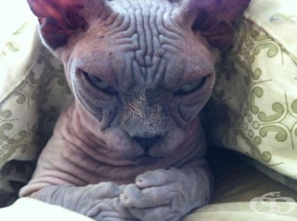Тази котка замисля да завладее света