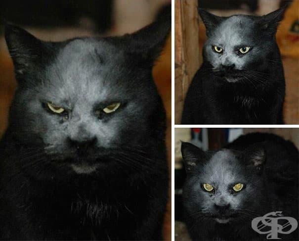 Той не е демон. Просто котка с брашно по муцуната.