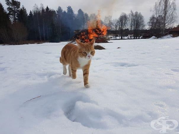 Котката на сестра ми, която се отдалечава от местопрестъплението…
