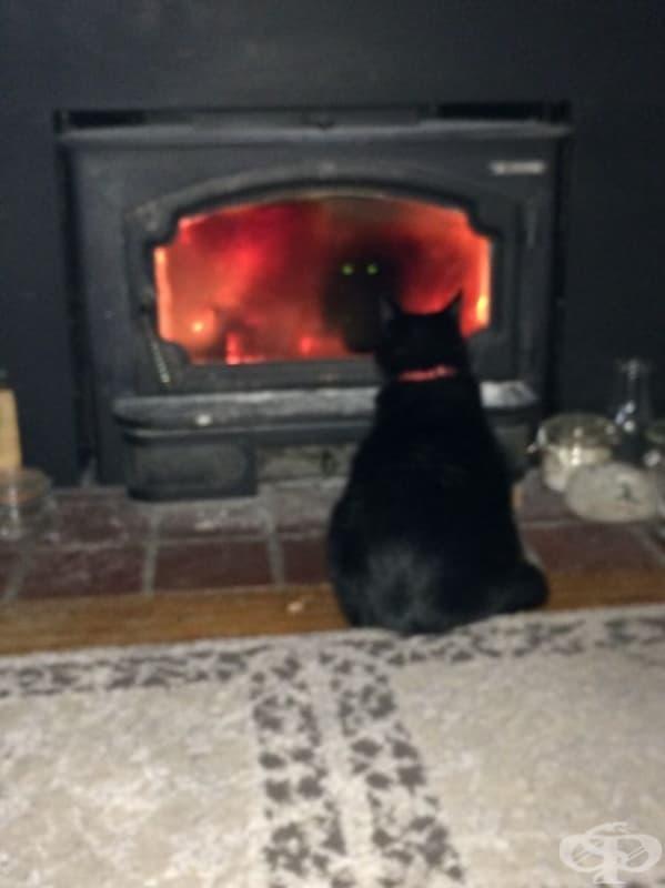 Мисля, че котката ми се опитва да призове демон
