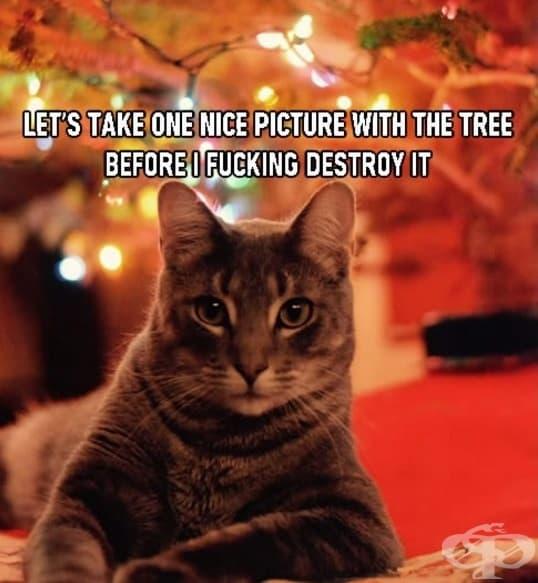 Нека да си направим една снимка с елхата, преди да я унищожа.