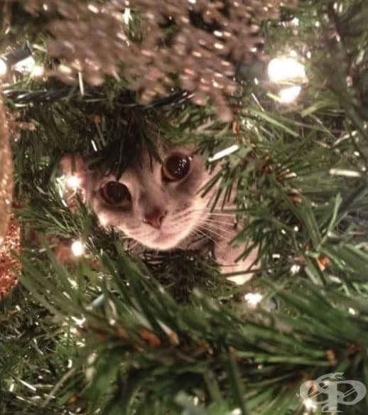 Просто проверявам дали наистина тук не се крият подаръци.