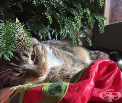 Просто ще разпускам тук. Събудете ме, когато Дядо Коледа пристигне.