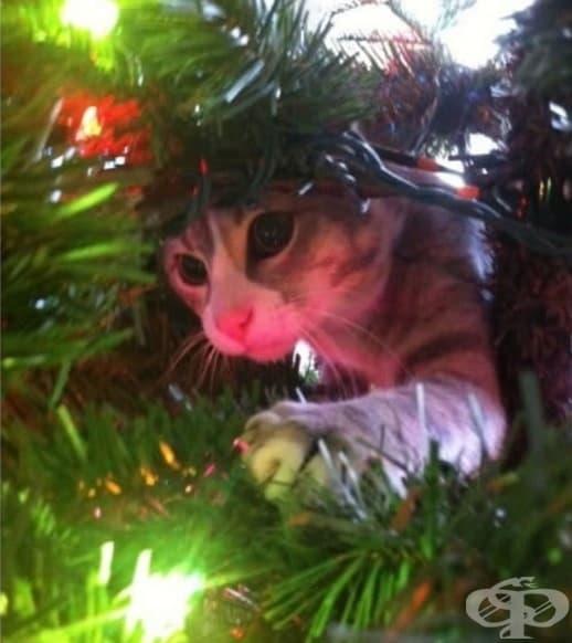Ще хвана тези ярки, сияещи елхови мишки.