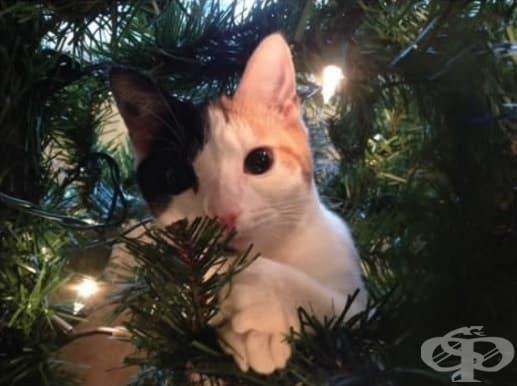 Трябва да признаете, че това дърво наистина кара козината ми да блести.