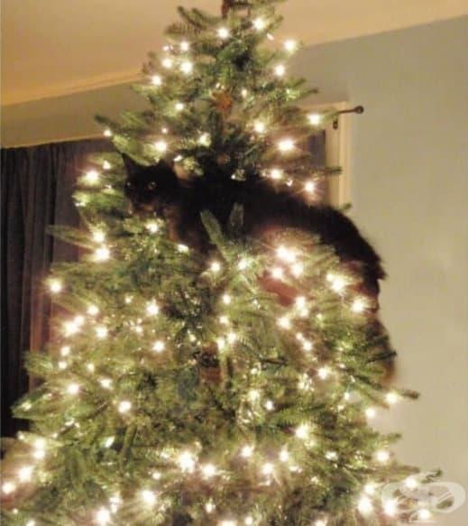 Одобрявам това блестящо, поклащащо се котешко дърво.