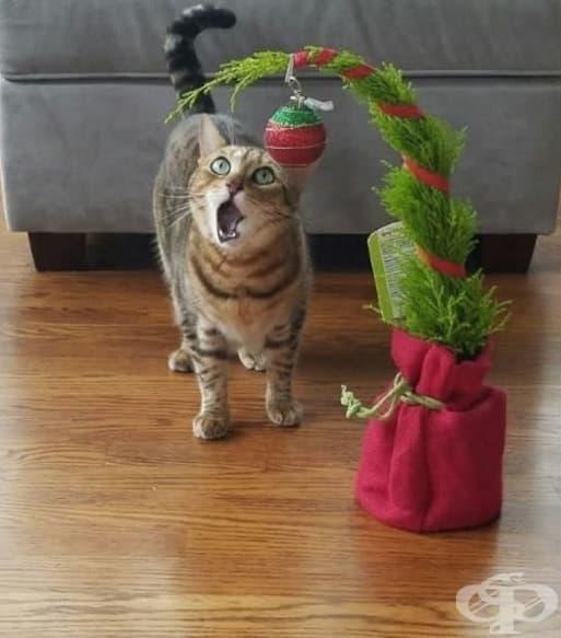 Вече е Коледа? Е, стига бе!