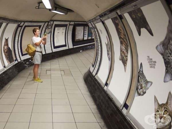Плакати с котки заместиха всички реклами в лондонска метростанция