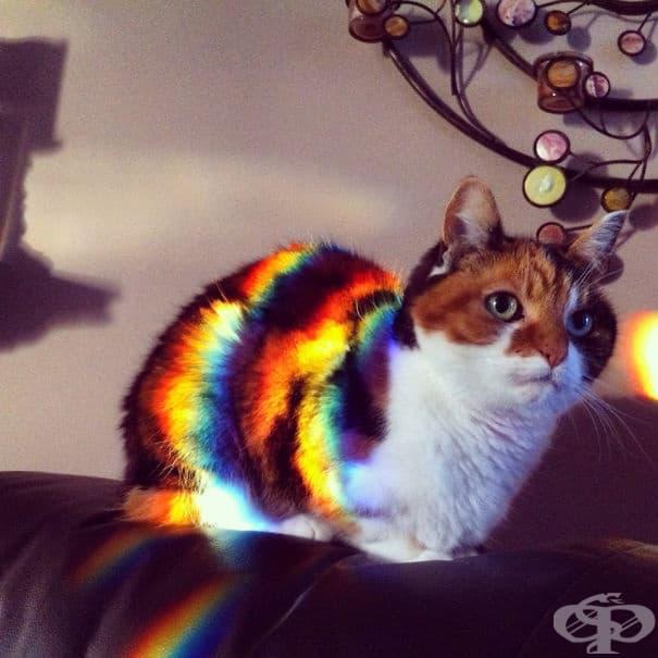 Дали наистина в тези котки няма нещо вълшебно?