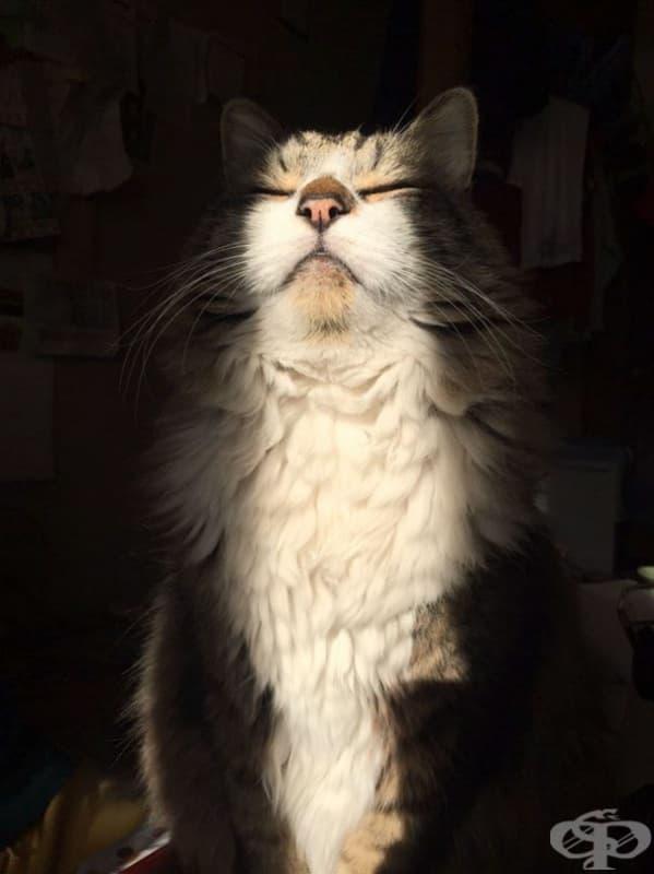 Котките признават само един бог – Богът Слънце!