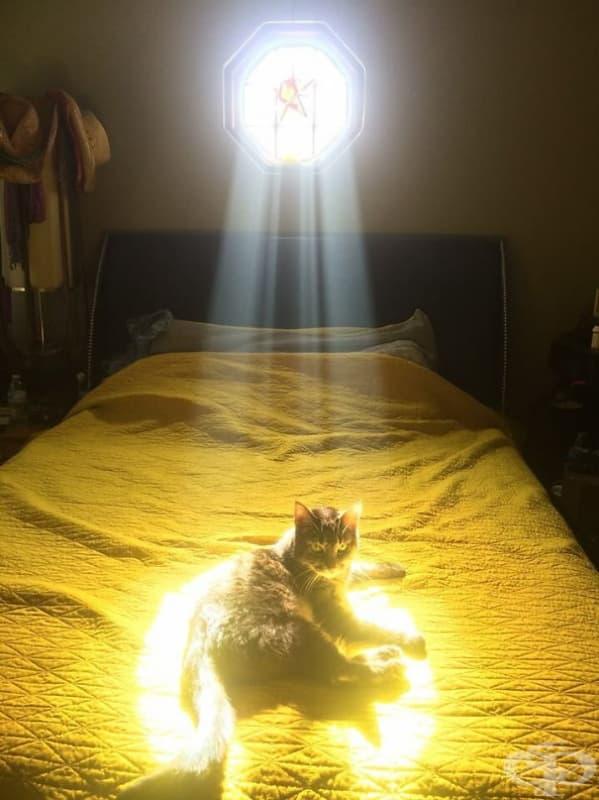 Тази котка е Избраната