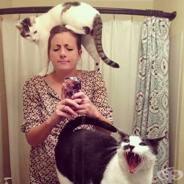 Котките завладяват света!