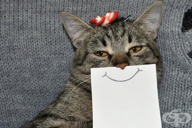 Тази котка с нарисувани лицеви изражения е всичко, което ви трябва, за да избухнете в смях!
