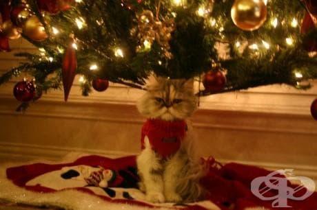 25 котки, които никак не споделят коледния дух
