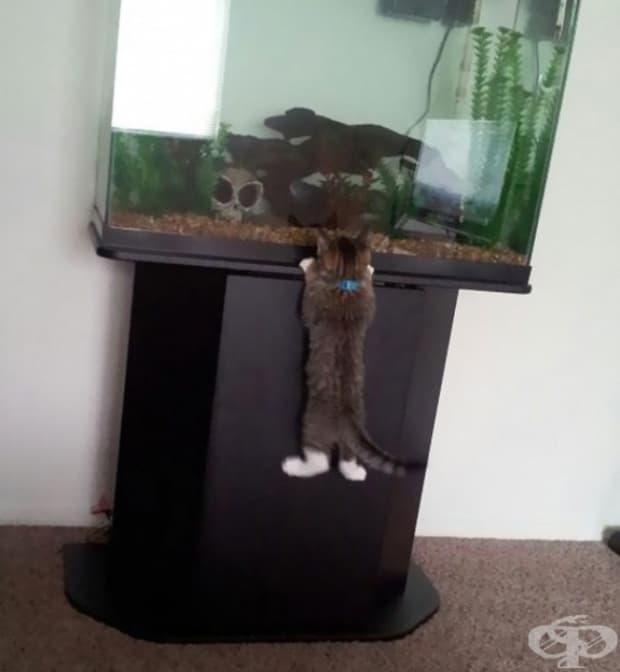 Когато порасна, ще видим чии са тези рибки в действителност.