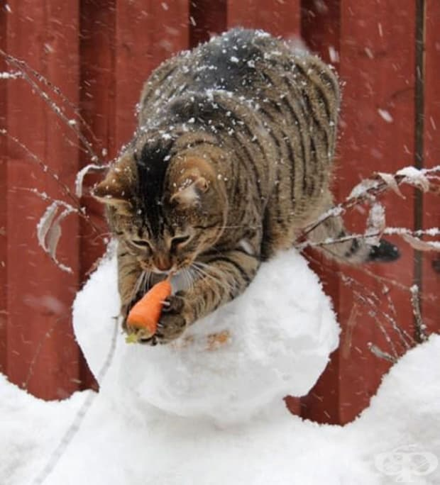 Какво прави този морков тук?