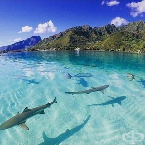 Френска Полинезия