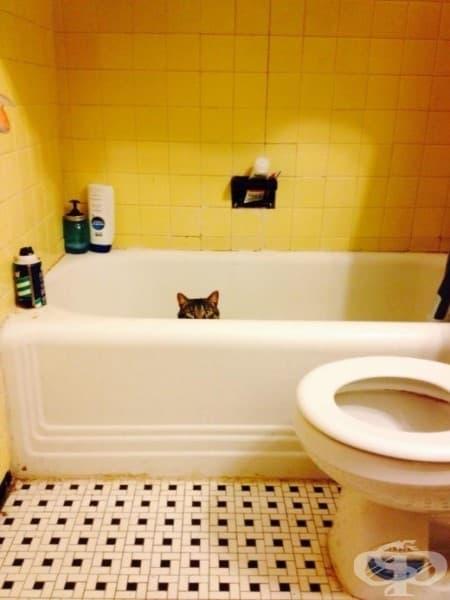 Поради някаква причина той смята, че бялата баня е добър камуфлаж…