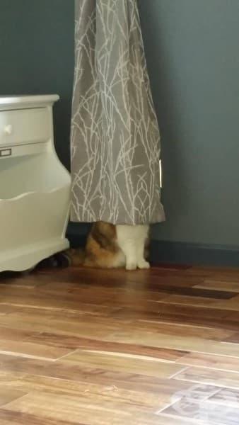 Класическо скривалище. Работи всеки път при деца, котки и кучета…