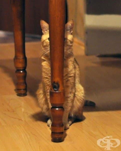 Котка нинджа. Ниво: начинаещ…