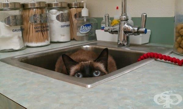 Не можем да разберем защо котките смятат, че мивката е перфектното скривалище…
