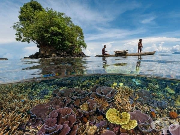 Кристално чистите брегове на провинция Папуа, Индонезия.