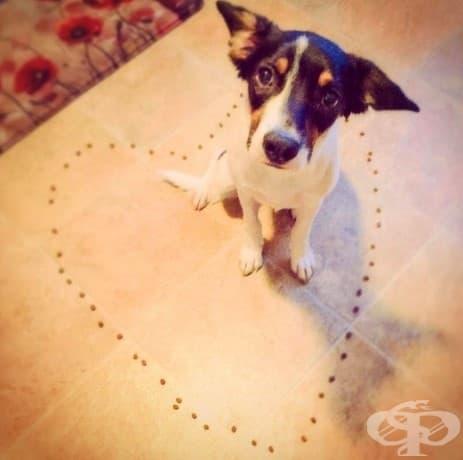 17 снимки, които показват колко търпеливи същества са кучетата!