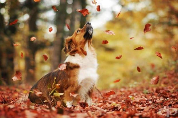 Невероятни есенни портрети на кучета