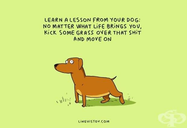 Вземете урок от вашето куче: независимо какво ви поднася живота, хвърлете малко трева отгоре му и продължете напред