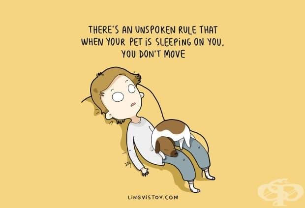Съществува неписано правило, според което, когато домашния любимец спи върху вас, вие не помръдвате