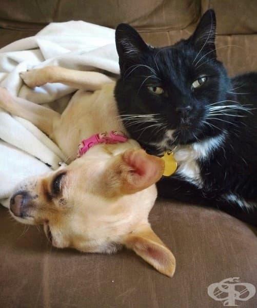 20 сладко гушкащи се кучета и котки