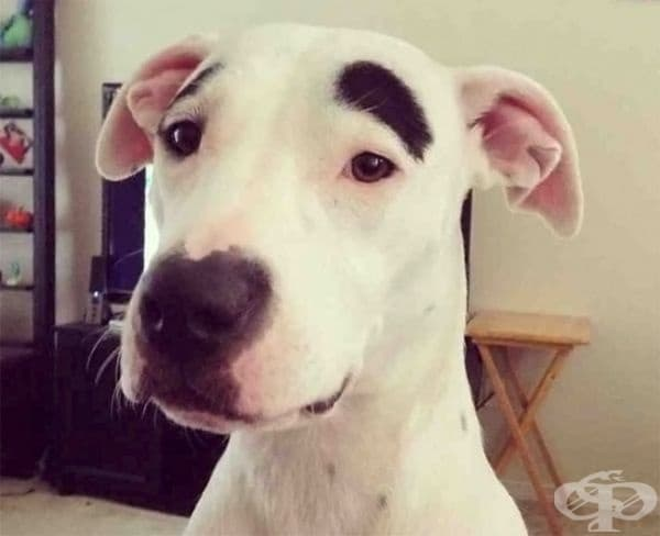 Загрижено куче.