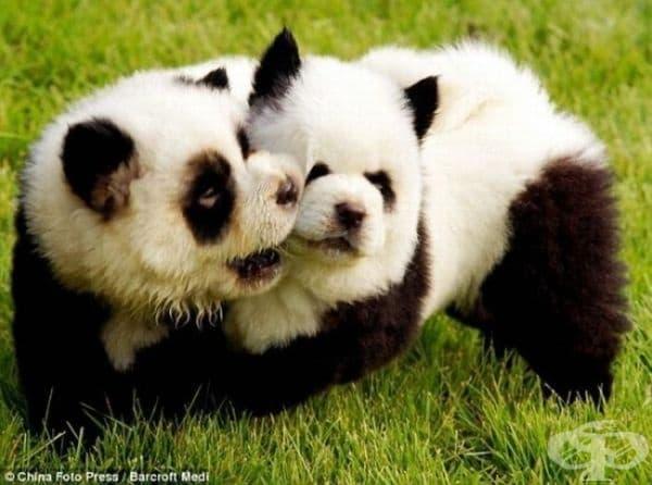 Панда кученца.