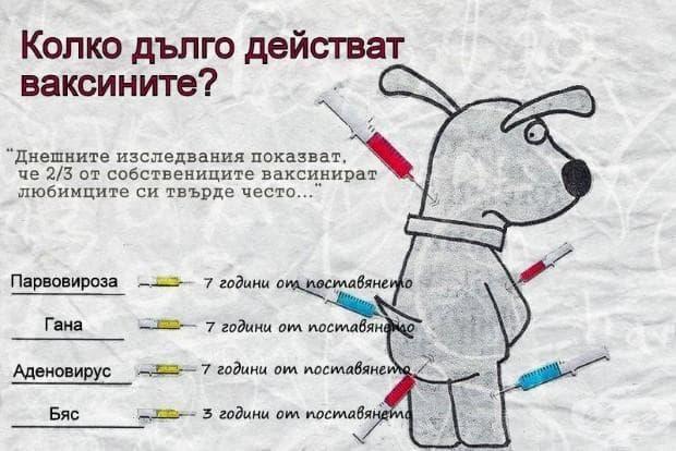 Колко дълго действат ваксините върху вашето куче?