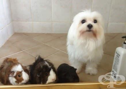 10 кучета преди и след баня